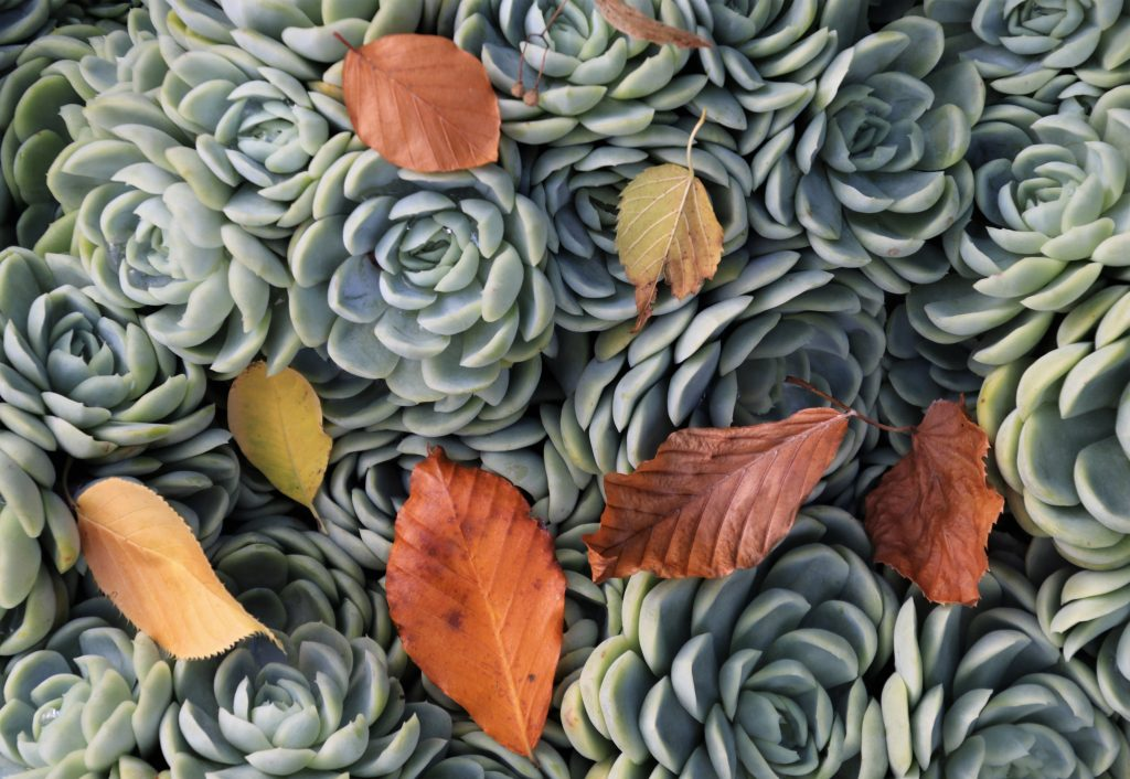 succulents-4542731-scaled.jpg