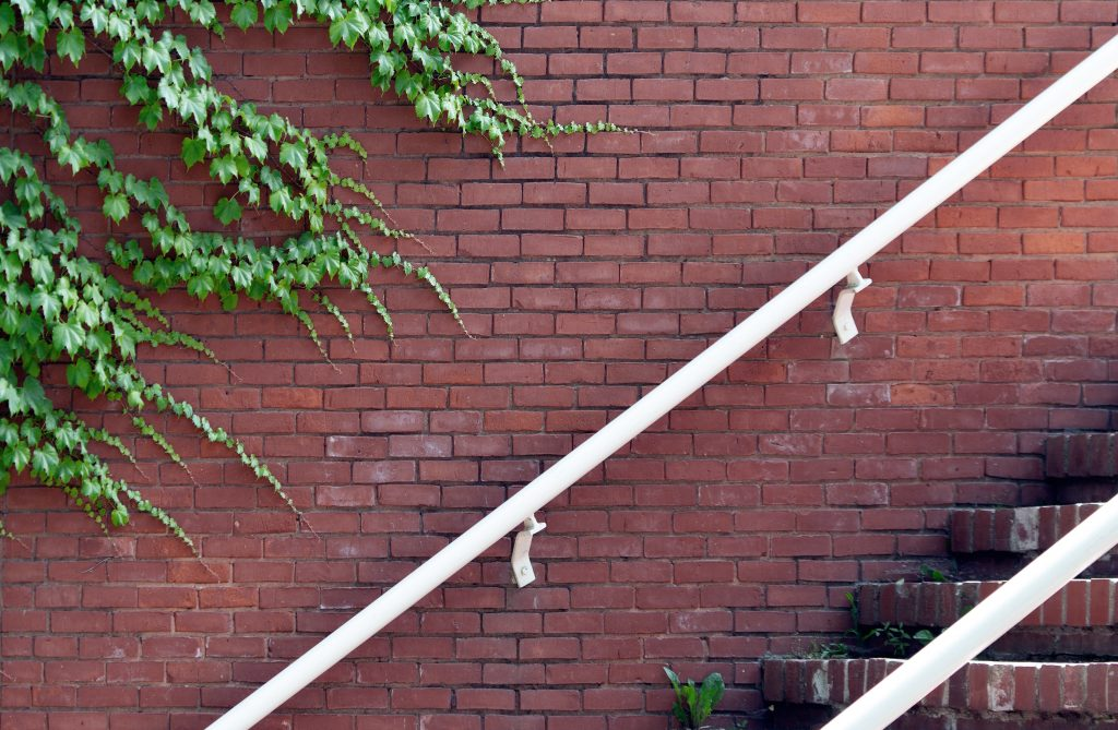 Urban — Brick Vine Free Photo —By Ryan McGuire gratisography-brick-vine